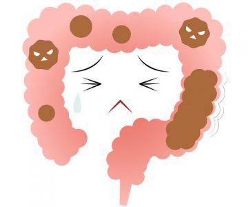 暴飲暴食が続く腸は善玉菌優勢